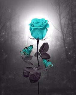 Teal Gray Rose Butterfly Photo Art Decorative Room Wall Deco